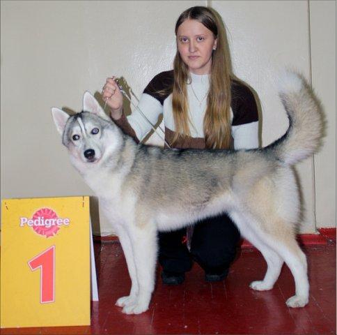 Вязка собак: в каком возрасте можно вязать собаку, до какого